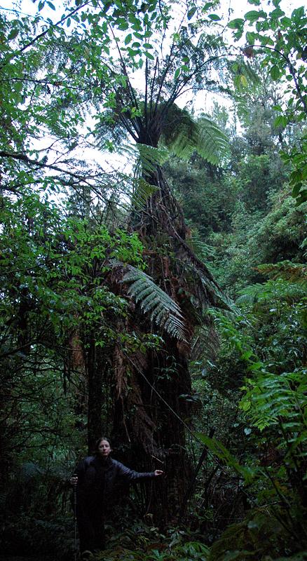 Новая Зеландия: Пещеры Ваитомо.