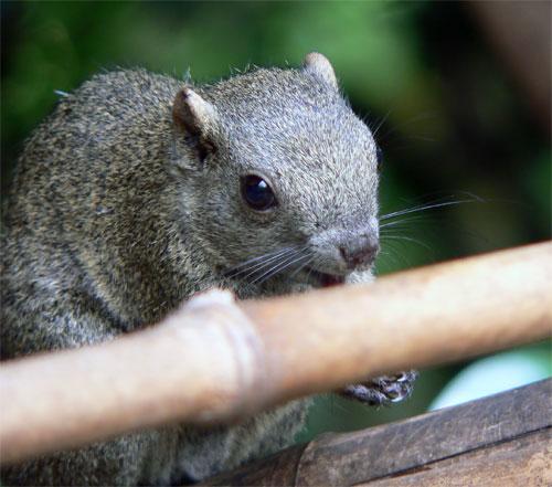 http://www.karlson.ru/lj/squirrel_peanut01.jpg