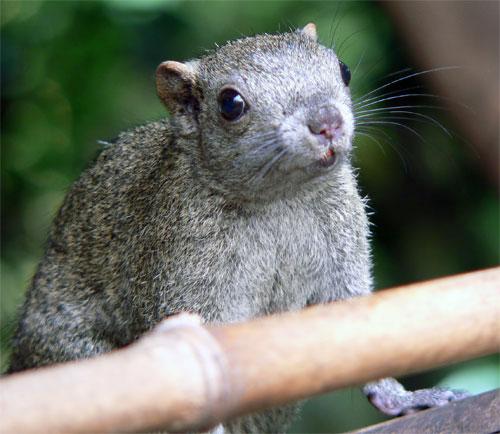 http://www.karlson.ru/lj/squirrel_peanut02.jpg
