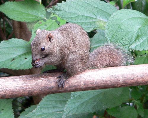http://www.karlson.ru/lj/squirrel_peanut05.jpg